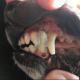 Dog's mouth glued shut after eating a brochure
