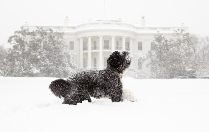 Teen suffers bite from Obama's dog