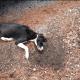 Strangled dog found on side of road