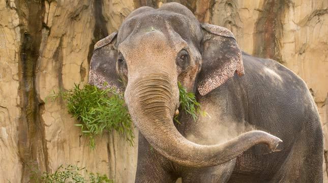 Beloved elephant euthanized
