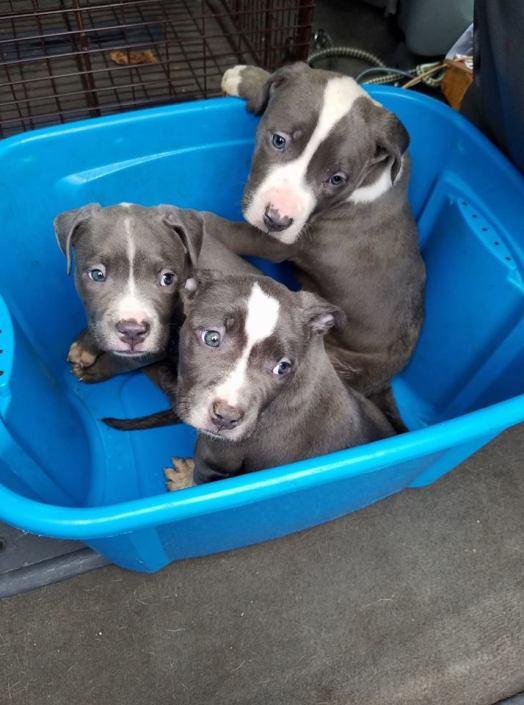 Parvo puppies abandoned on highway