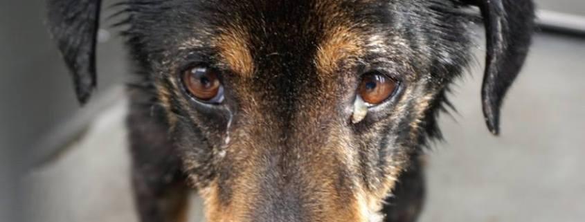 Ailing senior at busy animal control