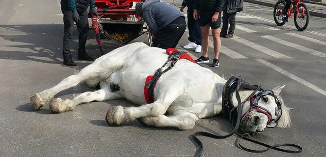 Horse collapses in Central Park