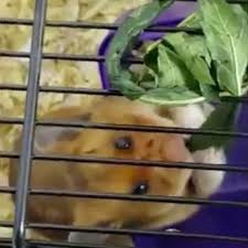 Hamster abuse 2