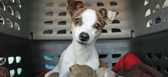 Deadly distemper outbreak at city shelter