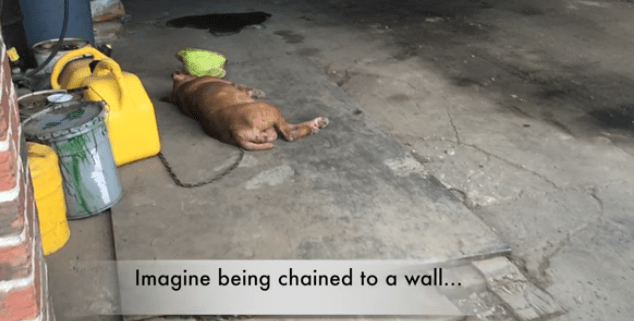 Lola was chained to a wall for 8 years