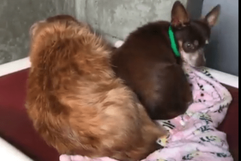 Two surrendered dogs shake in terror