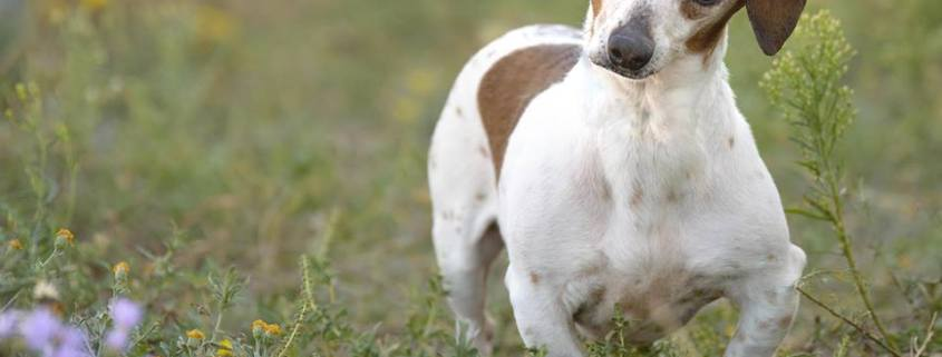 Senior dog has least viewed profile on rescue's website
