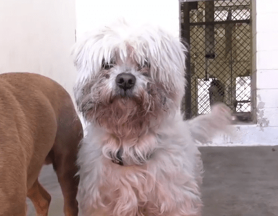 Elderly dog lost home because family had a baby