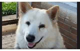 Reward offered in cruelty case