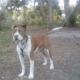 Dog's death blamed on shelter miscommunication
