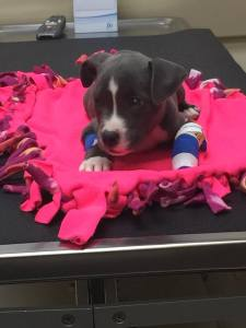 Puppy mutilated and dumped in park