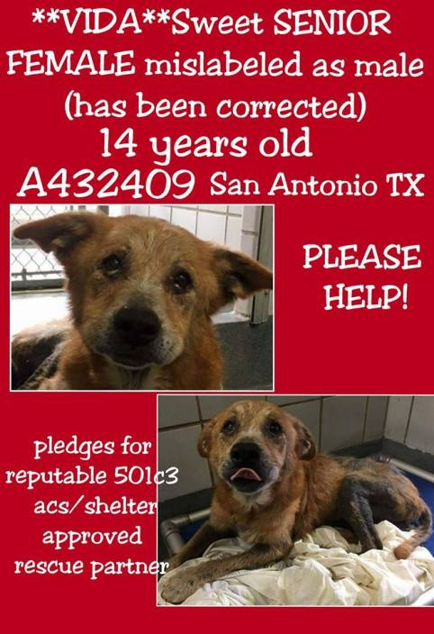 old and neglected dog needs help