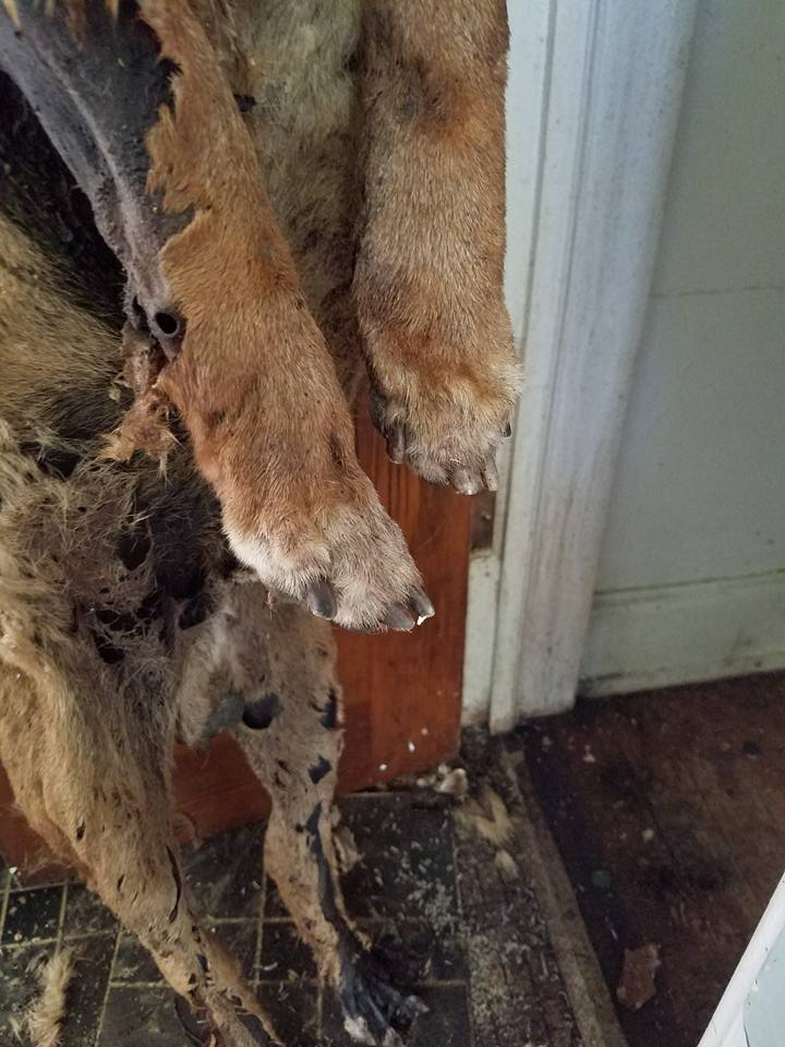 Dogs Found In House