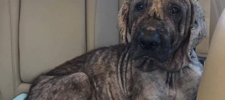 Extent of dog's suffering revealed