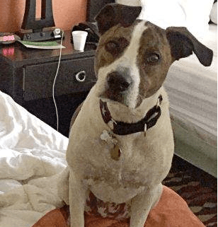 Dog escaped from hospital
