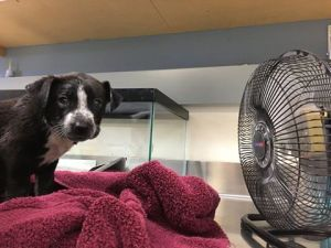 puppy rescued from 133-degree car