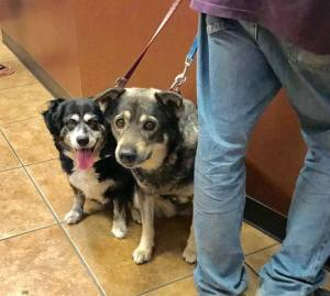 Dogs surrendered by callous owner
