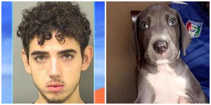 Teen accused of beating puppy to death