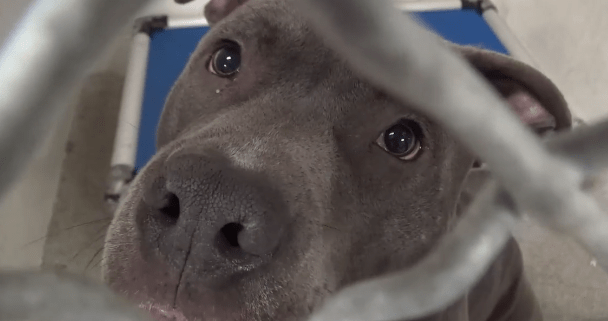 Dog homeless after landlord said that he had to go