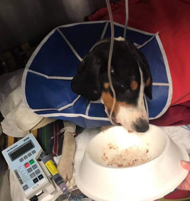Dog continues to fight for his life