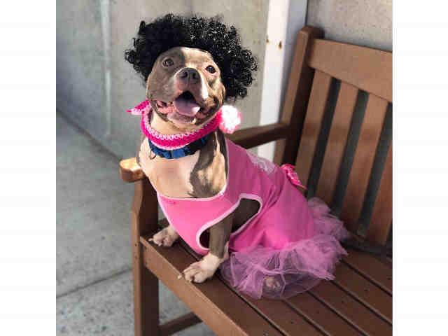 Tippi the princess is a death row dog