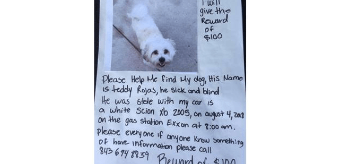 Blind dog stolen with car
