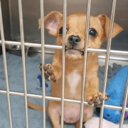 Crazy reason puppy is in 'jail'