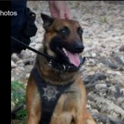 Police K9 takes a bite out of crime