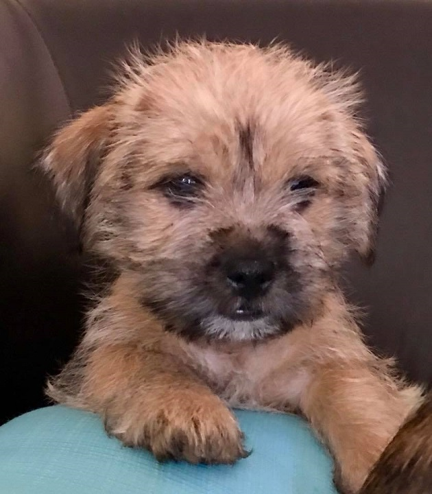 senior dog rescue florida