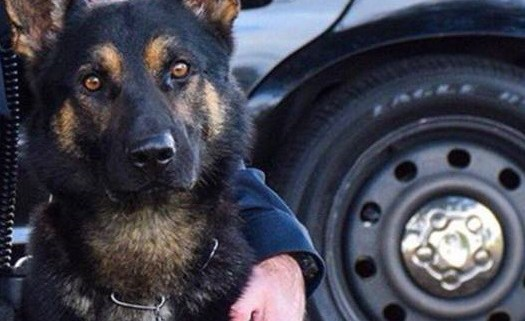 K9 stabbed to death
