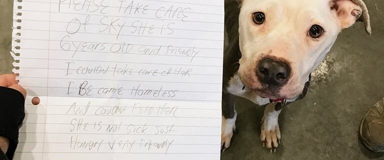 Abandoned dog found with note from former owner