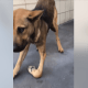 Betrayed dog, with broken leg, left at animal control
