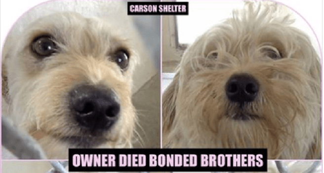 Bonded dogs at animal control after death of owner