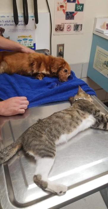 Boy accused of killing pets with insulin