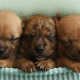 Photographer treats newborn foster puppies to amazing photoshoot