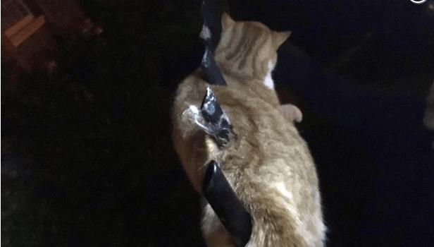 Cat impaled on fence
