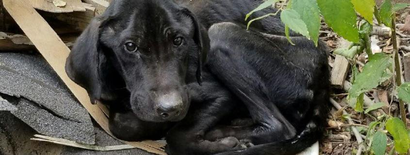 Emaciated dog found at abandoned house