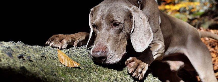 Dog shot by hunter