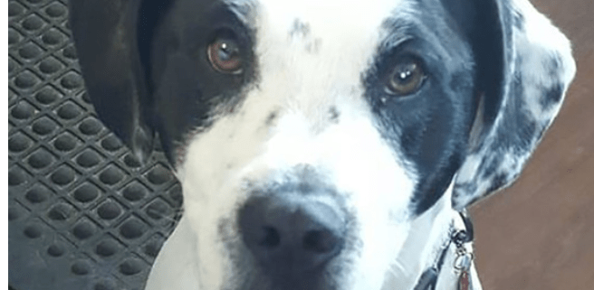 Dog shot and killed for peeing on trees
