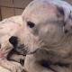 Surrendered dog trembles in shelter