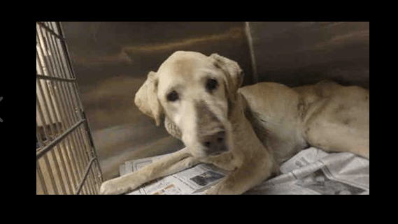 Elderly dog at animal control