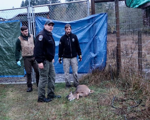 Wildlife officials killed fawn and young elk