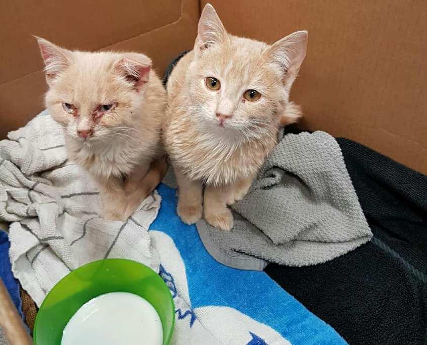 K9 finds frozen kittens