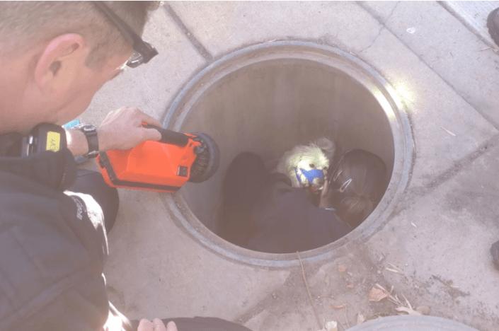 dog impaled after falling into manhole
