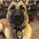 Police K9 ripped from family