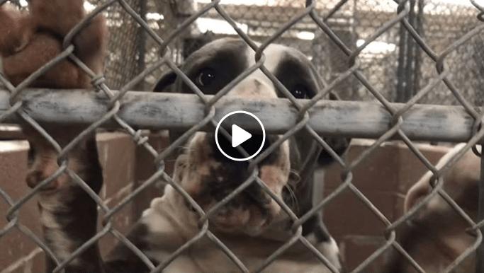 Last plea for owner-surrendered dog