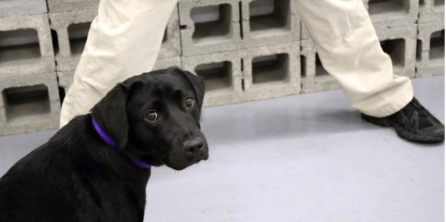 CIA fires Lulu the dog
