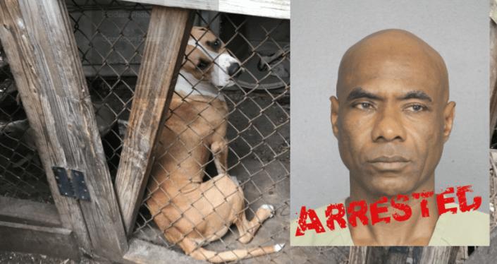 Man arrested for running illegal slaughterhouse
