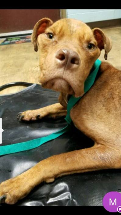 No good news to share about starved Walmart parking lot dog